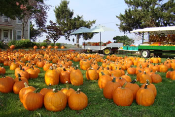 We offer pumpkins and ornamentals in every size and shape.